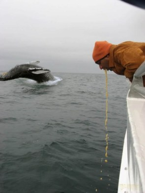 sick whale