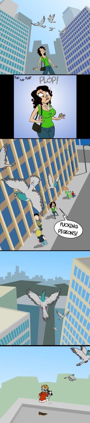 Fucking pigeons!