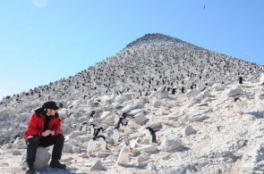 Penguin mountain