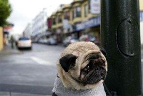 Depressed Dog on the Street