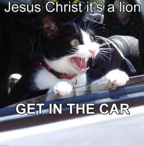 Jesus Christ, it's a Lion!