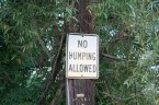 No Humping Allowed