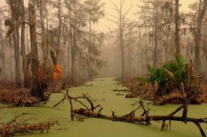 Swamp wallpaper