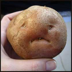 Sad Potato