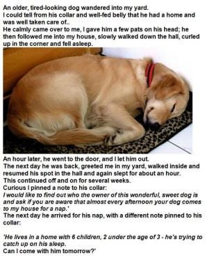 sleepin dogs