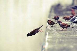 bird jumps off