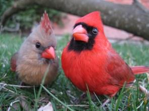bird mates