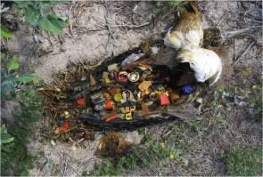 Dead bird contents