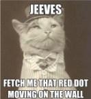 Classy laser cat