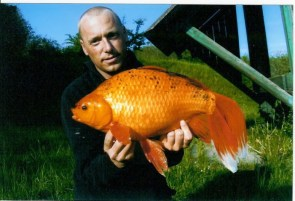 Huge Goldfish