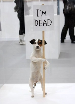 Dog with a sign