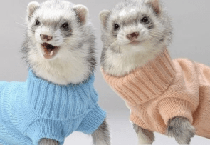 turtle necks on ferrets