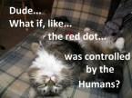 Contemplative stoner cat