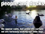 People and Ducks.