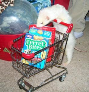 Ferret Shopping