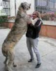 Long dog is longer