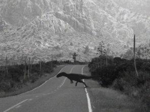 Chupacaciraptor sighting