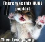 This is what catnip does