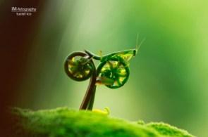 Bicycle bug