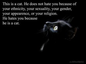 hate full cats