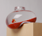 Bendy fishbowl