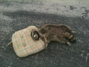 RIP Coon