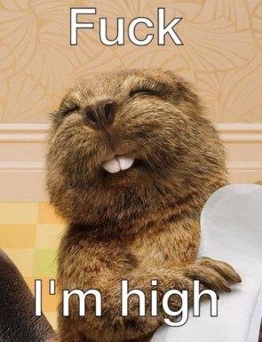 fuck I ma high