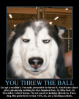 You threw the ball.