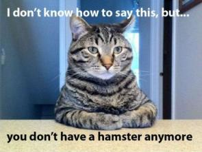 About your Hamster