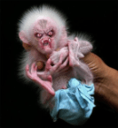 Baby Predator