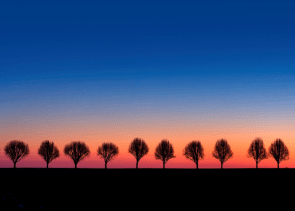 Dusk tree line