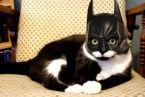It's the BatCat!