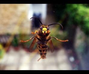 A wasp, I think…