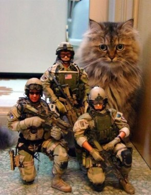 American Soldiers With Cat