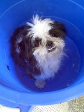 Bucket Dog Likes The Bucket