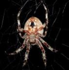 Spider…