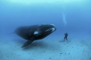 Spending Time With a Whale