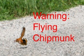 Flying Chipmunk