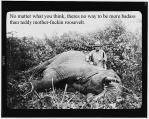 Roosevelt_safari_elephant.jpg