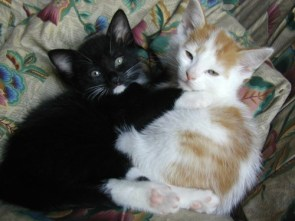 My pet kittens – Vince and Jules