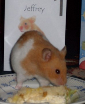 My Pet Hamster – Jeffrey