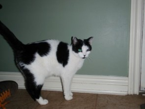 My pet cow/cat – Apollo