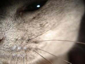 My Pet Cat – Kira