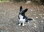My Pet Dog – Max