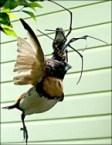 Bird Eating Giant Spider