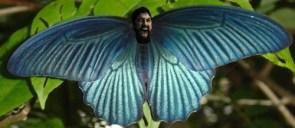 Spartafly