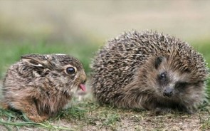 Bunny and Hedgehog