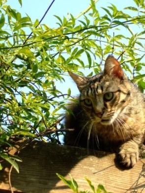 My Pet Cats – Sandy, Cassius (aka Fatkitty), Izzy, and Kitty