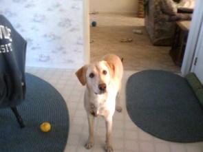 My Dog Cassie
