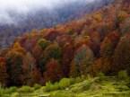 More Autumn Wallpaper